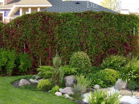 Стена из красивых лиан.
