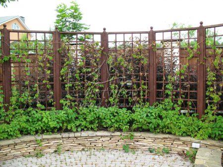 Декоративная изгородь.