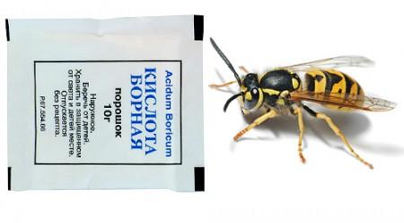 Борная кислота для уничтожения насекомых.