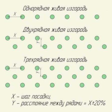 Различные схемы посадки живой изгороди.
