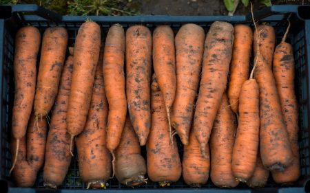 Хранение моркови в домашних условиях