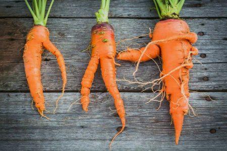 Выкопали смешные морковки.
