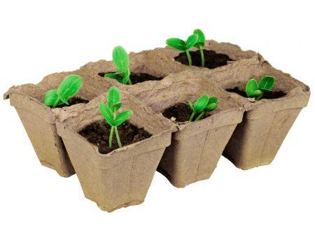 Правила выращивания огуречной рассады.
