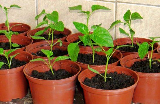 Посуда для выращивания рассады