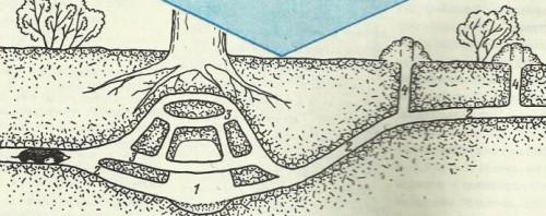 Кротовьи ходы под землей