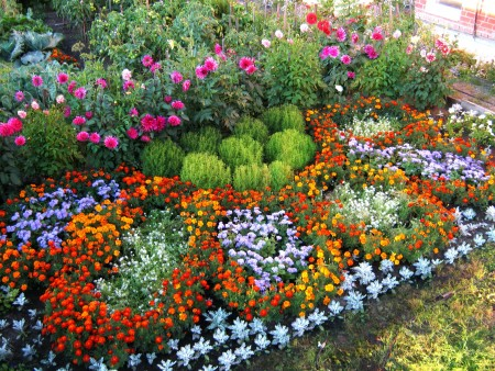 Посадка цветов по Лунному календарю.