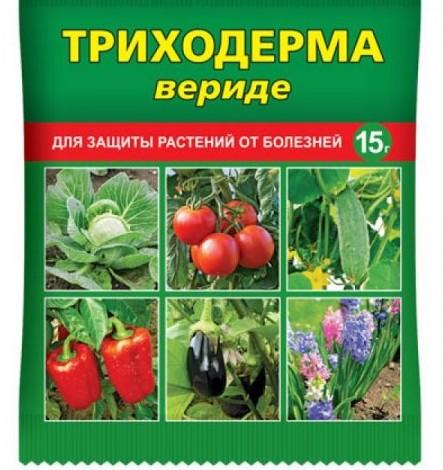 Подготовка грунта к посеву семян.