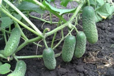 Календарь садовода и огородника на июнь 2018 года