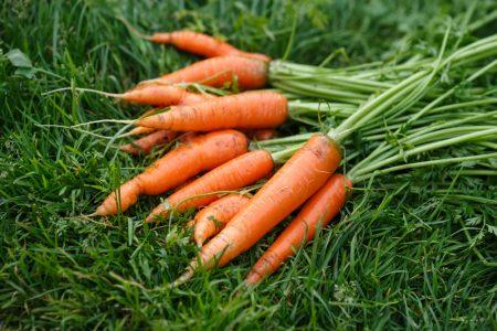 Благоприятные дни для уборки моркови.
