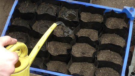 Подготовка грунта для выращивания рассады баклажанов.