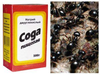 Сода против муравьев.