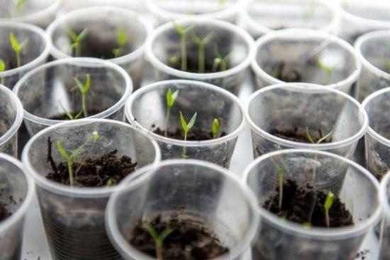 Стаканчики для выращивания рассады