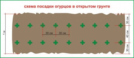 Схема посадки огурцов в грядки.