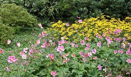 Какие цветы лучше посадить в саду.