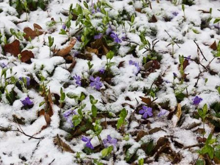 Зимовка растения.