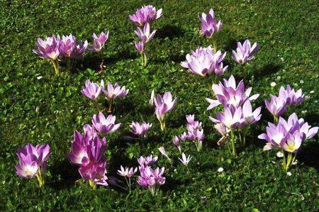 Цветы на поляне.