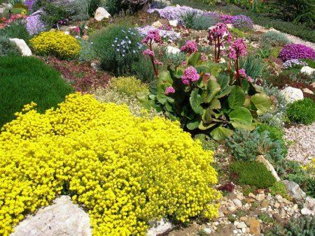 Ухаживаем за цветами в саду.