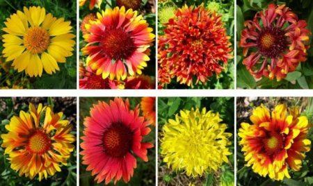 Разные варианты расцветок.