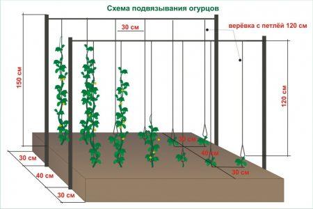 Схема подвязки огурцов.
