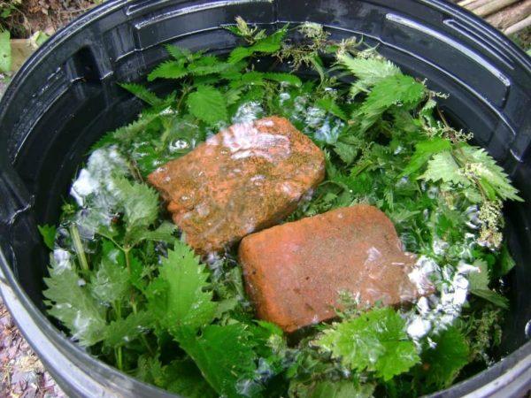 Как подкармливать растения зеленым удобрением