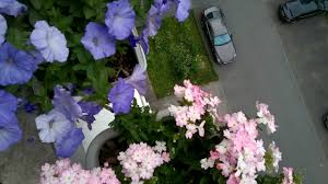 Цветы растут на балконе.