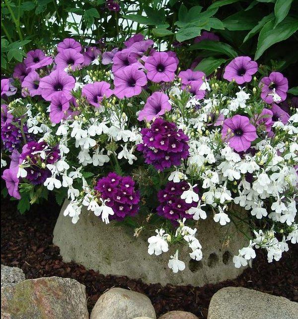 Цветы в вазоне.