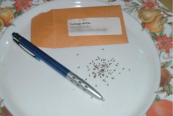 Как собирать семена.
