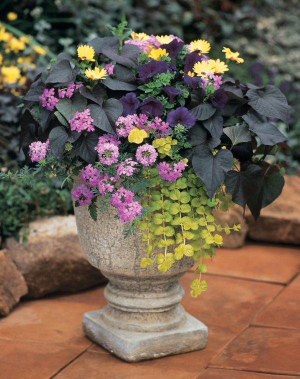 Посадка и уход за цветами в вазонах и кашпо.
