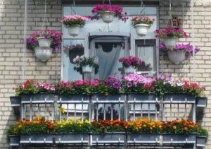 Выращивание цветов на балконе.