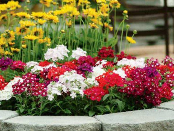Цветы на клумбе.