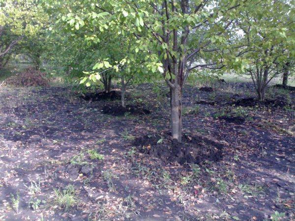 Осеннее удобрение для сада