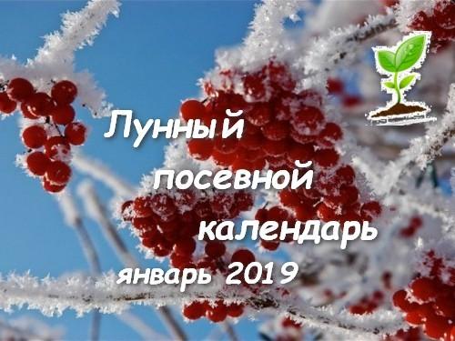 Лунный календарь садоводов огородников на январь 2019 года