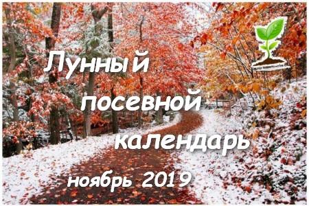 Лунный календарь садоводов, огородников и цветоводов на ноябрь 2019 года.