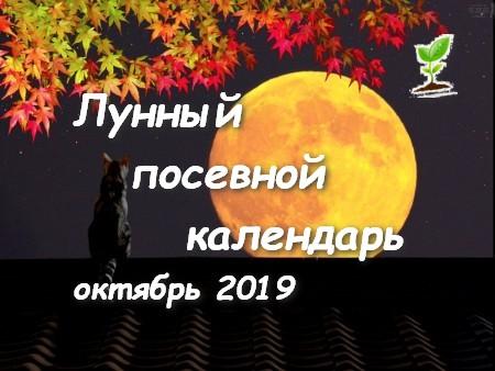 Посевной календарь на октябрь 2019 года.