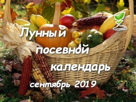 Лунный посевной календарь огородников на сентябрь 2019 года.