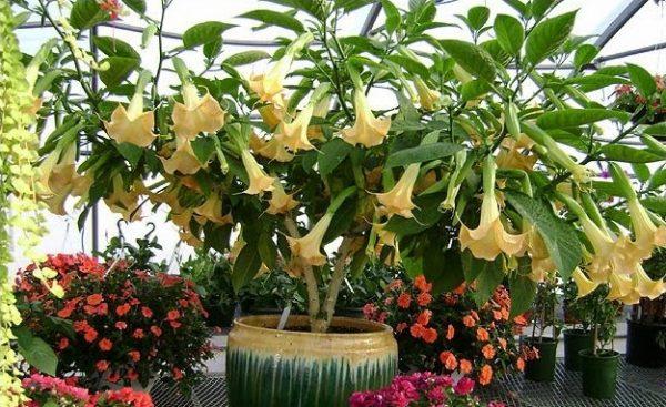 Цветы в оранжерее