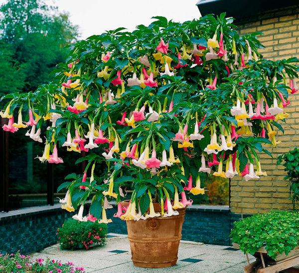 Растения с переплетенными стволами