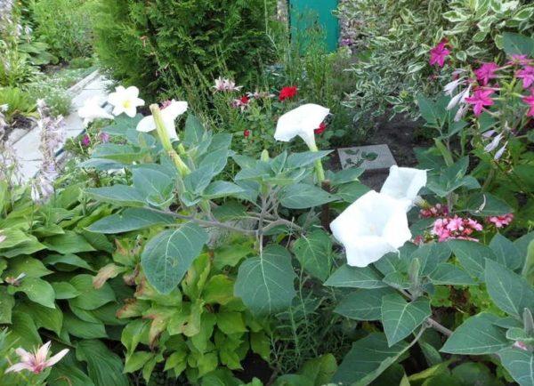 Густо посаженные растения