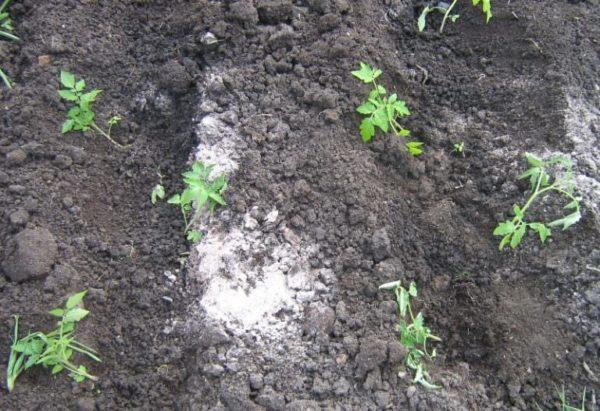 Высадка томатов в открытый грунт.
