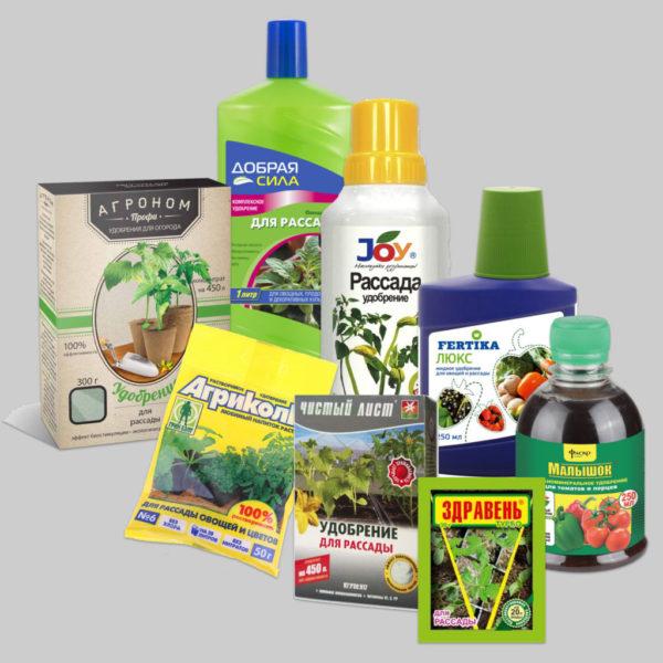 Подкормка и полив рассады помидоров в домашних условиях