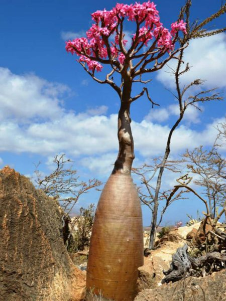 Цветущее дерево в форме бутылки