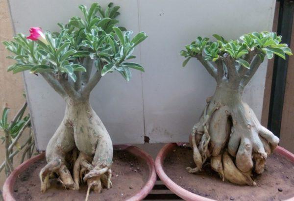 Формирование деревца