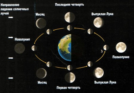 Лунный календарь садоводов и огородников для Сибири на 2019 год