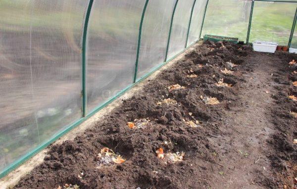 Подготовка лунок для высадки рассады в теплице