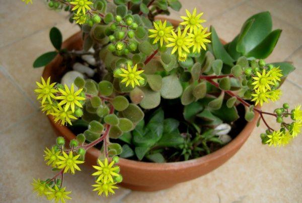 Посадка цветка в горшок