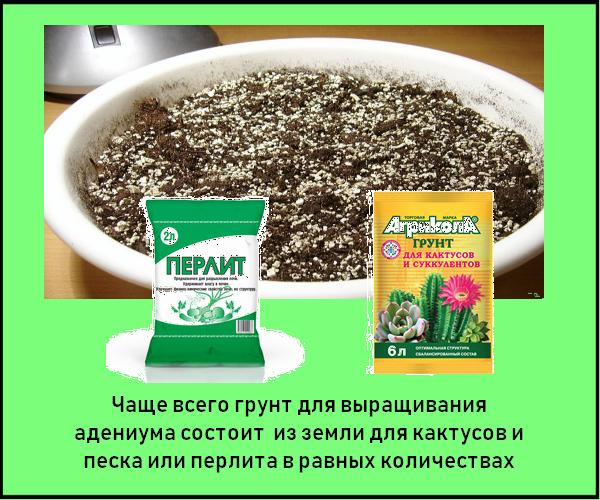 Грунт для проращивания семян адениума