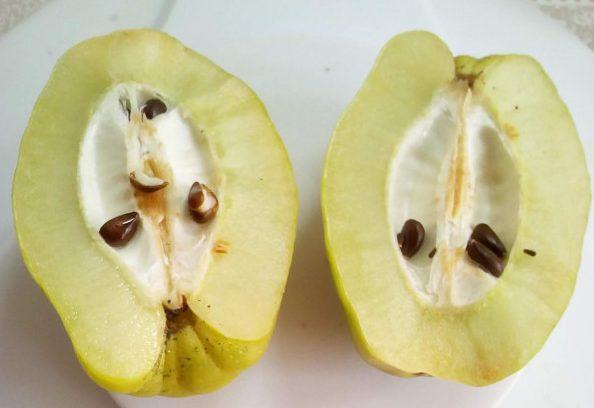Семена японской айвы
