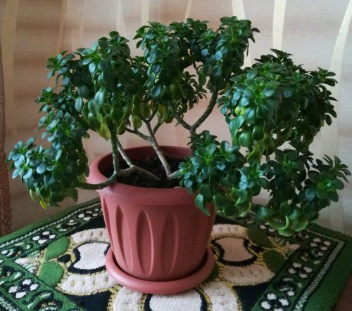 Зимнее содержание растения