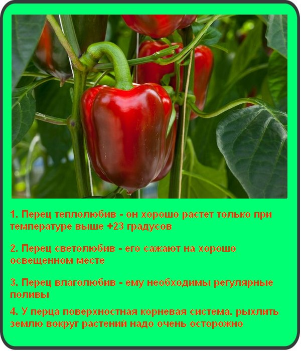 Условия для выращивания перцев