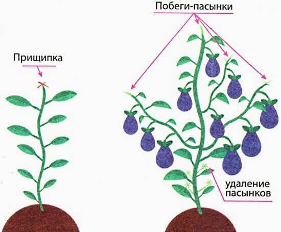 Схема формирования куста